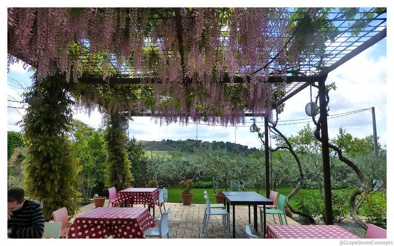 Priorat wisteria covered patio clos figueras 2014