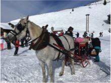Horse draw sleigh avoriaz